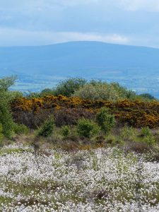 Distant views of the Caldbeck fells