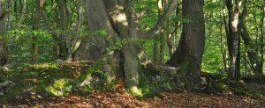 Ancient woodland – Great Orton