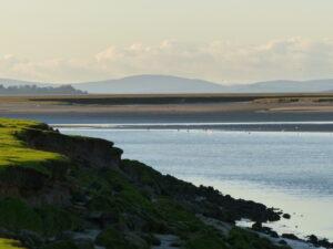 A Solway salt marsh